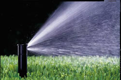 Irrigation Managementin Sacramento