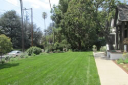 Landscape-Renovation-and-Enhancementin Sacramento