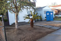 Palm planting in Sacramento