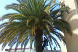 Palm removal in Sacramento