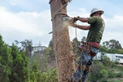 Tree thinning in Sacramento