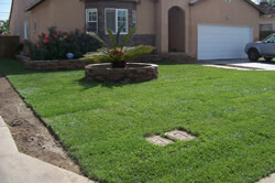 lawns maintenance and installationin Sacramento