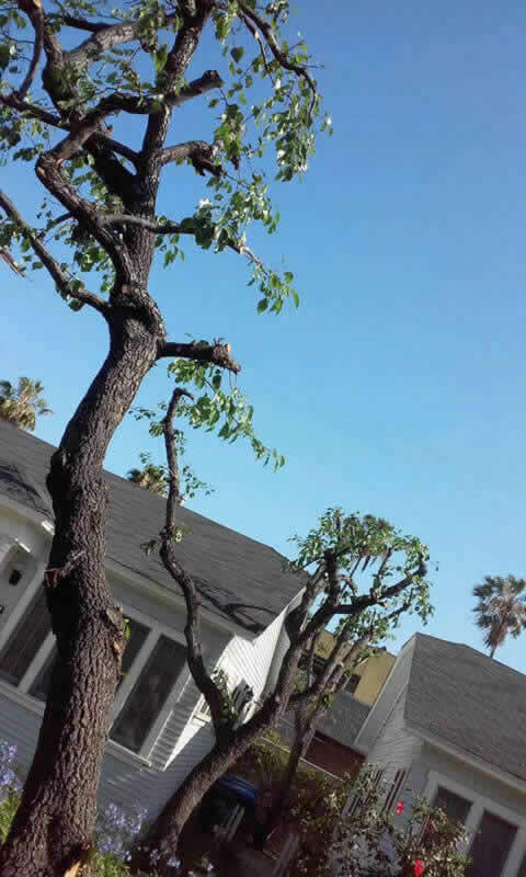 Best Tree Service in Sacramento
