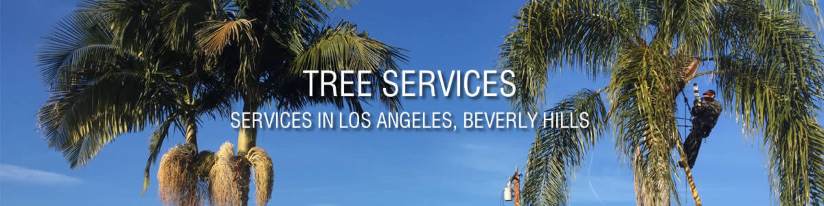 Tree Services in Sacramento