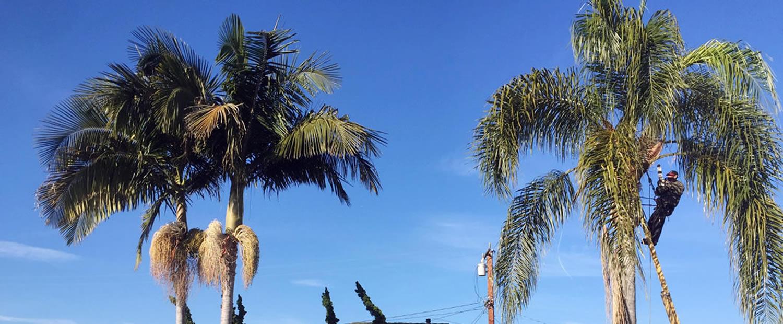 Tree Service in Sacramento