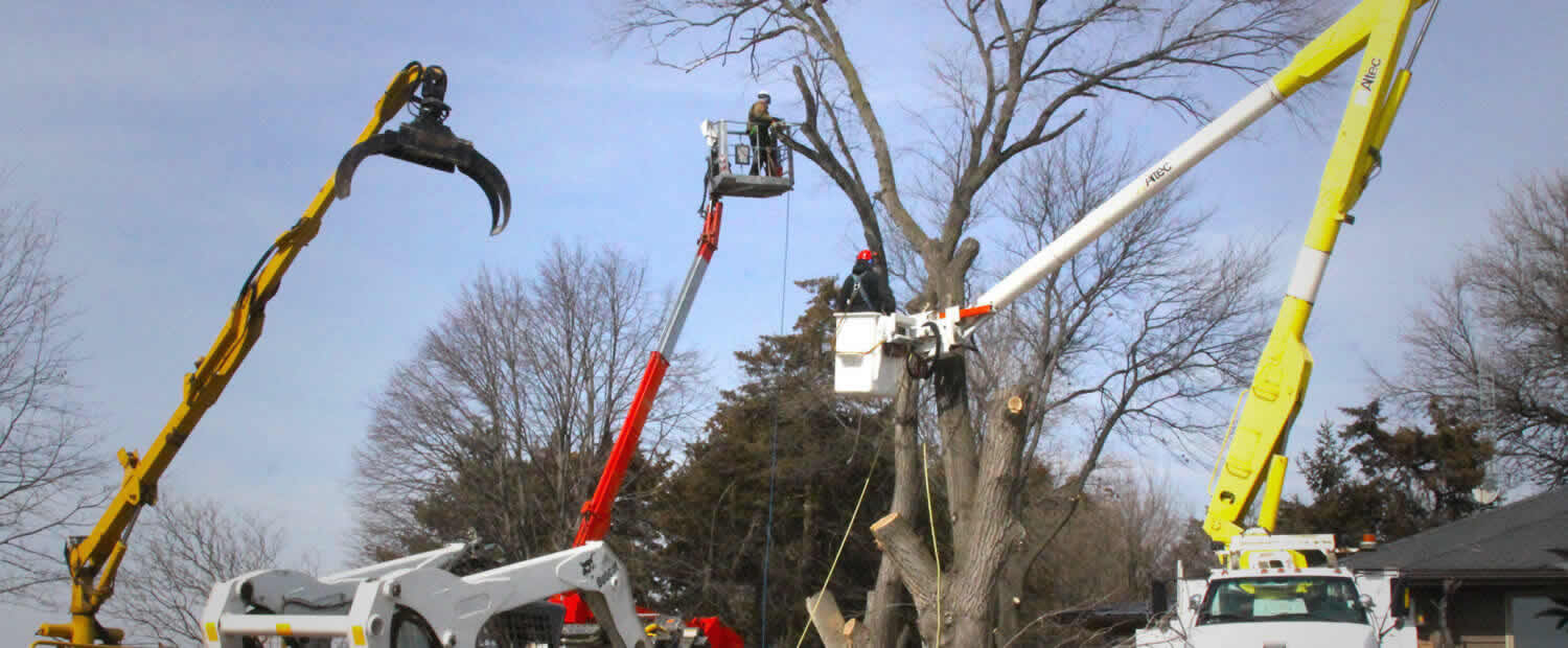 Tree Removal specialists