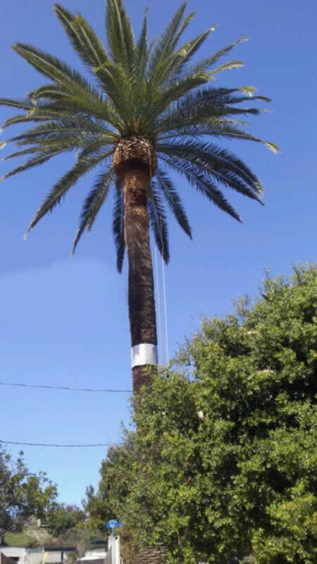 Best Tree Pruning in Sacramento