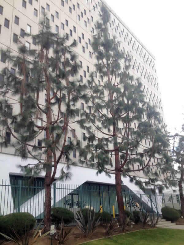 Best Tree Company in Sacramento