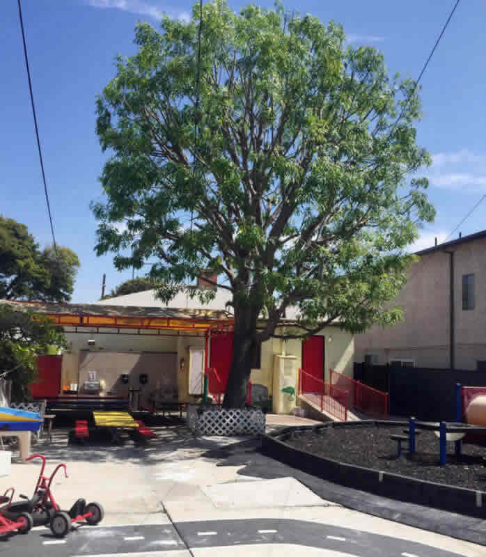 Best Tree Emergency in Sacramento