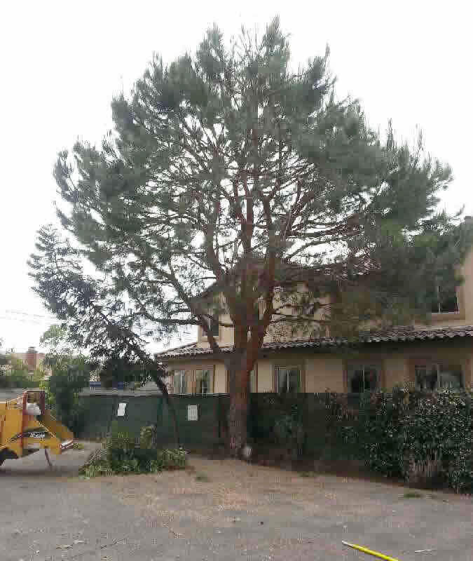 Gallery for Tree Company in Sacramento