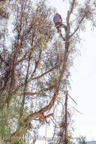 Gallery for Tree Emergency in Sacramento
