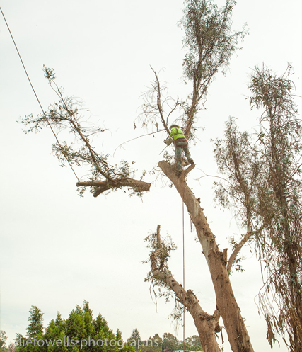 Gallery for Tree Service in Sacramento