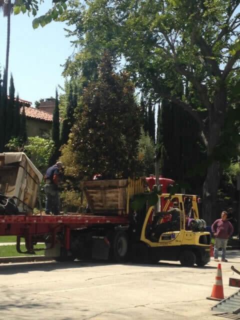 Tree removal services Image-1a Sacramento
