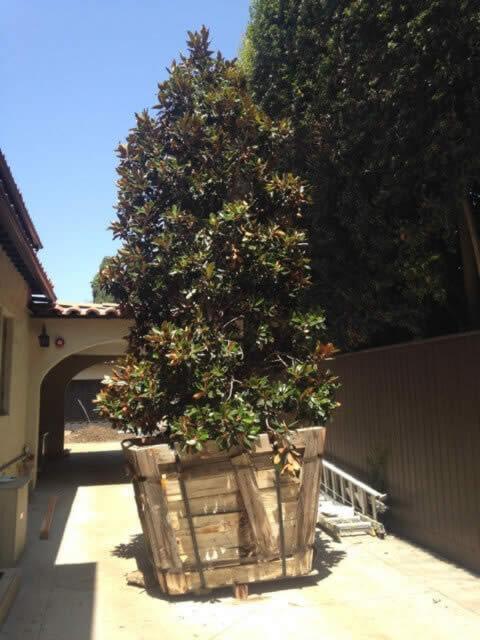 Tree removal services Image-1b Sacramento