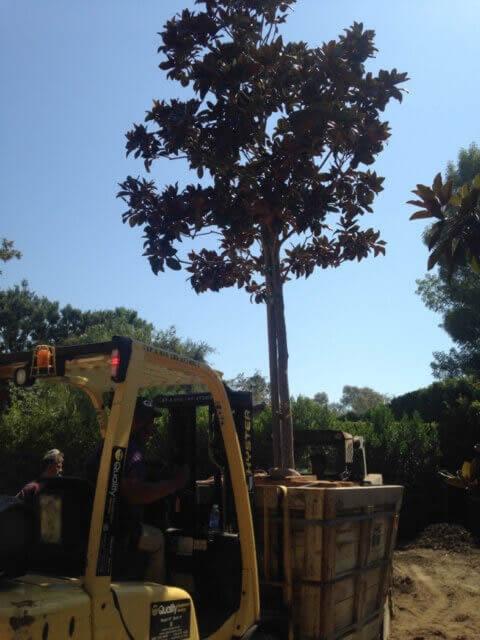 Tree removal services Image-2a Sacramento