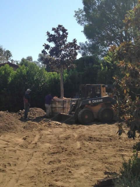 Tree removal services Image-2b Sacramento